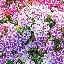 200pcs Bonsai Phlox Seeds 100% echte Bio-blühender Blumen-Samen Garten-Anlage Heim Seed Topf Sale!
