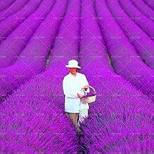 200pcs französisch Provence Lavendel Samen sehr aromatisch organischen Lavendel Samen Pflanze Blume Blumensamen Gartenbonsai