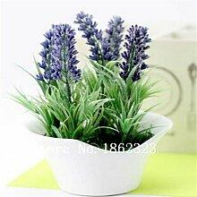 200pcs Lavendel Samen Kraut Samen Garten Balkon Topf Vier Jahreszeiten Blumensamen