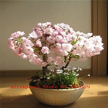 2014 Sale Zeitlich begrenzte Freeshipping 20 PC Creeper Seeds Boston Ivy Seed Heim & Garten Pflanze Garten Bonsai