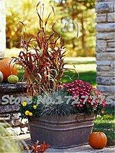 2015 200PCS Frühling Grassamen Sukkulenten Pflanze Grassamen DIY Bonsai Topf Garten Heim Exotische Pflanze Interessante