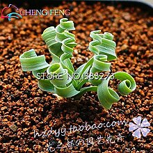 2016 100pcs Frühlings-Gras-Samen Sukkulenten Pflanze Gras Samen Diy Bonsai Topf Garden Home Exotische Pflanze Interessante