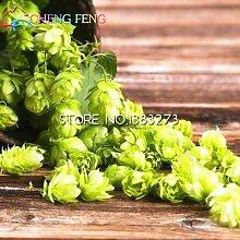 2016 20pcs Humulus lupulus Samen Pflanzen bilden Rhizome Seltene Blumen-Hops Seed Wein Raw Kräuter Bonsai Pflanze Hausgarten geben Schiff frei