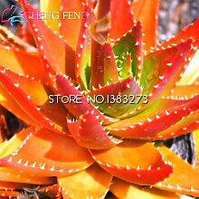 2016 20pcs Qualitäts-Aloe Samen Seltene Kräuter Samen Grüne Bonsai Pflanze Baum Kaktus-Garten Pot Seeds 49% weg vom Verkauf *