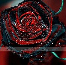 2016 neue 50 Rote und schwarze Rosen-Samen, seltene Farbe, reiches Aroma, DIY Hausgarten Rose Pflanze verrückt Promotion-S0101