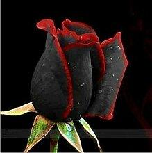 2016 neue 50 Schwarze und rote Rosen-Samen, seltene Farbe, reiches Aroma, DIY Hausgarten Rose Pflanze verrückt Promotion-S0098