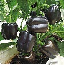 2017 100 Samen / pack Heiße Bonsai Chili-Samen Bio-Gemüsesamen Für Hausgarten 11