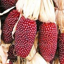 20pcs Ananas-Frucht grün Gemüsesaatgut Mais Non-GMO Hof Freies Verschiffen 1