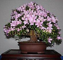 20pcs / bag Japanische Azalee Samen, Rhododendron Azalee, Blumensamen Baumsamen decken Blume 15 Farben DIY Pflanze Hausgarten Bonsai