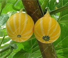 20pcs / bag Rare Kürbiskerne Cucurbita Golddraht Kürbis saftig Bio Bonsai Gemüse kriechende Obstgarten Pflanze Easy 1 Wachsen