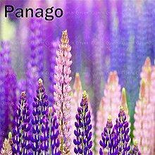 20pcs bunte Aussehen Samen Blume Bonsai Samen Das Aussehen Lupinus Zierpflanze für Hausgarten für Hausgarten 4