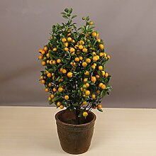 20pcs Eßbares Obst Mandarin Samen Indoor