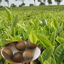20pcs / lot chinesischer grüner Tee-Baum-Samen