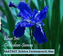 20x Blaue Iris Orchideen Samen Blume Blumensamen Pflanze Saatgut Rarität Garten innen und außen Neuheit #61