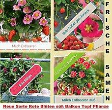 20x Milch Erdbeeren Balkon Garten Saatgut Samen Pflanze Rarität essbar Obst #260