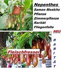 20x Nepenthes Samen Moskito Pflanze Zimmerpflanze Rarität Fliegenfalle Samen Hingucker Pflanze Rarität #236