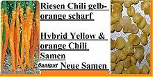 20x Riesen Chili Gelb Orange Saatgut Pflanze Samen Rarität scharf Garten selten Gemüse Neuheit #115