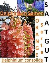 20x Riesen Delphinium cultorums Orange Samen Garten Pflanze Saat Rarität #291