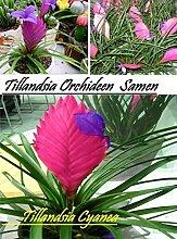 20x Tillandsia Orchideen Samen Blumen Blumensamen Saatgut Blume Zimmer Garten Frisch Seltene Pflanze Rarität Neuheit #53