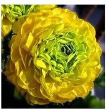 24 Arten Hübsche Pfingstrose sät 15pcs / pack Qualitäts-Pfingstrosen-Blumen-Samen für den Hausgarten 3