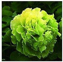 24 Arten Hübsche Pfingstrose sät 15pcs / pack Qualitäts-Pfingstrosen-Blumen-Samen für den Hausgarten 5