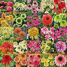 25 Arten Mix Echinacea Außen Blume Pflanze