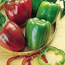 25 Stück Samen Paprika Samen Gemischte Pfeffer