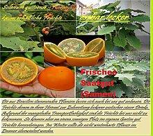 25x Orange Naranjilla Lulo seltene Frucht Samen Saatgut Garten Pflanze Rarität essbar Obst #126