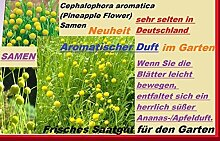 25x Pineapple Blumen Samen Ananas-Apfelduft Duft Pflanze Garten frisches Saatgut Blumensamen Neu #168