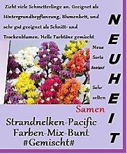 25x Strandnelken Bunt Regenbogen Mix Samen Blumensamen Saatgut Pflanze Garten Neuheit Blume #146