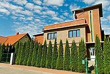25x Thuja Smaragd Lebensbaum 15-30cm im Topf -