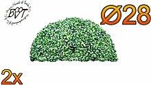 2x PREMIUM Buchsbaum, große Buchsbaum-Halbkugel