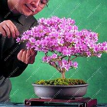 3: 20 Teile/beutel 22 Arten Azalee Blumensamen