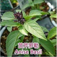 3: Echte Samen, 10 Teile/los Basilikum, Ocimum