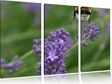 """3-tlg. Leinwandbilder-Set """"Biene auf Kriechender"""