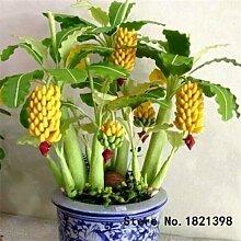 30 PC Dwarf Banana Samen Bonsai-Baum,