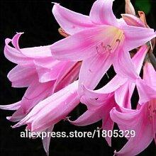 30 Samen / pack Preiswerte Gesundheit Gemüsesamen Rot Stängel Spinat Samen-Garten-Dekoration Bonsai Blumensamen
