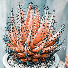 30 Stück Aloe Samen Seltene Farbe Sukkulenten Mini Garten Pflanzen, Edible Beauty Obst Vegeable Seed Kaktus Rebutia Kräuter Pflanze 10