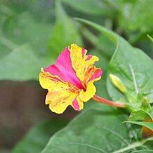 30 Teile/beutel Gelb Und Pink Blütenblätter