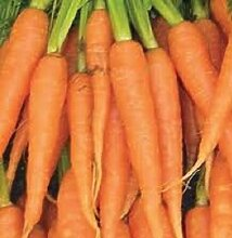 3000 Carrot Samen Imperator Karotten Gemüsesamen