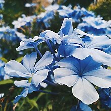 30000Pcs Gemischte Wilde Blumensamen Hausgarten