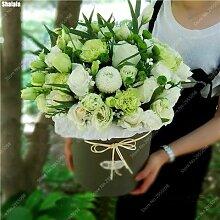 300pcs / bag Exotische Samen Rose Mixed Außen Blooming Bonsai Rosa Garten Zierpflanze für Blumentopf Pflanzer 5