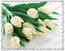 300true Tulpenzwiebeln, Tulpe Blume,
