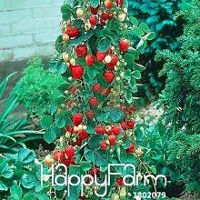 30pcs / bag Gemüsesamen, Atlantic Giant Kürbiskerne Garten Samen, # 5VMH1Q