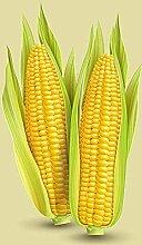 30Pcs Mais Samen Ausgewählt Mais Körner