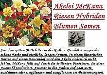 30x Akelei McKana Riesen Hybriden bunt Blumen Samen Blumensamen Saatgut Hingucker Pflanze Neue Sorte Garten #88