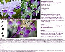 30x Cattleya Orchideen Samen 3 Sorten gemischt Saatgut Zimmer Garten Blume Pflanze Neuheit #22