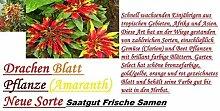 30x Drachen Blatt bunt Pflanze Amaranth Neue Samen Hingucker Pflanze Neu Garten Saatgut Neuheit #89