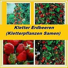 30x Kletter Erdbeeren Samen Rote Erdbeere Samen Pflanze Rarität essbar Obst #228