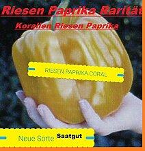30x Riesen Coral Paprika Samen Hingucker Saatgut Pflanze selten essbar groß Garten Gemüse #66
